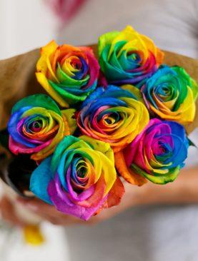 Букет из 7 радужных роз 70 см (Эквадор)