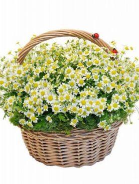 Цветы в корзине Застенчивые мысли