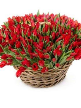 101 тюльпан в корзине