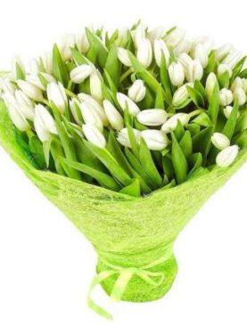 Тюльпаны белые 75 шт