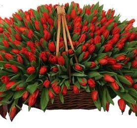Корзина из 501 красного тюльпана