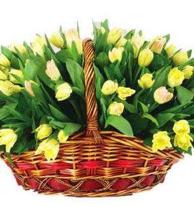 Корзина из 75 тюльпанов лимонного цвета